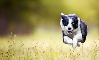 fast-dog-top.jpg