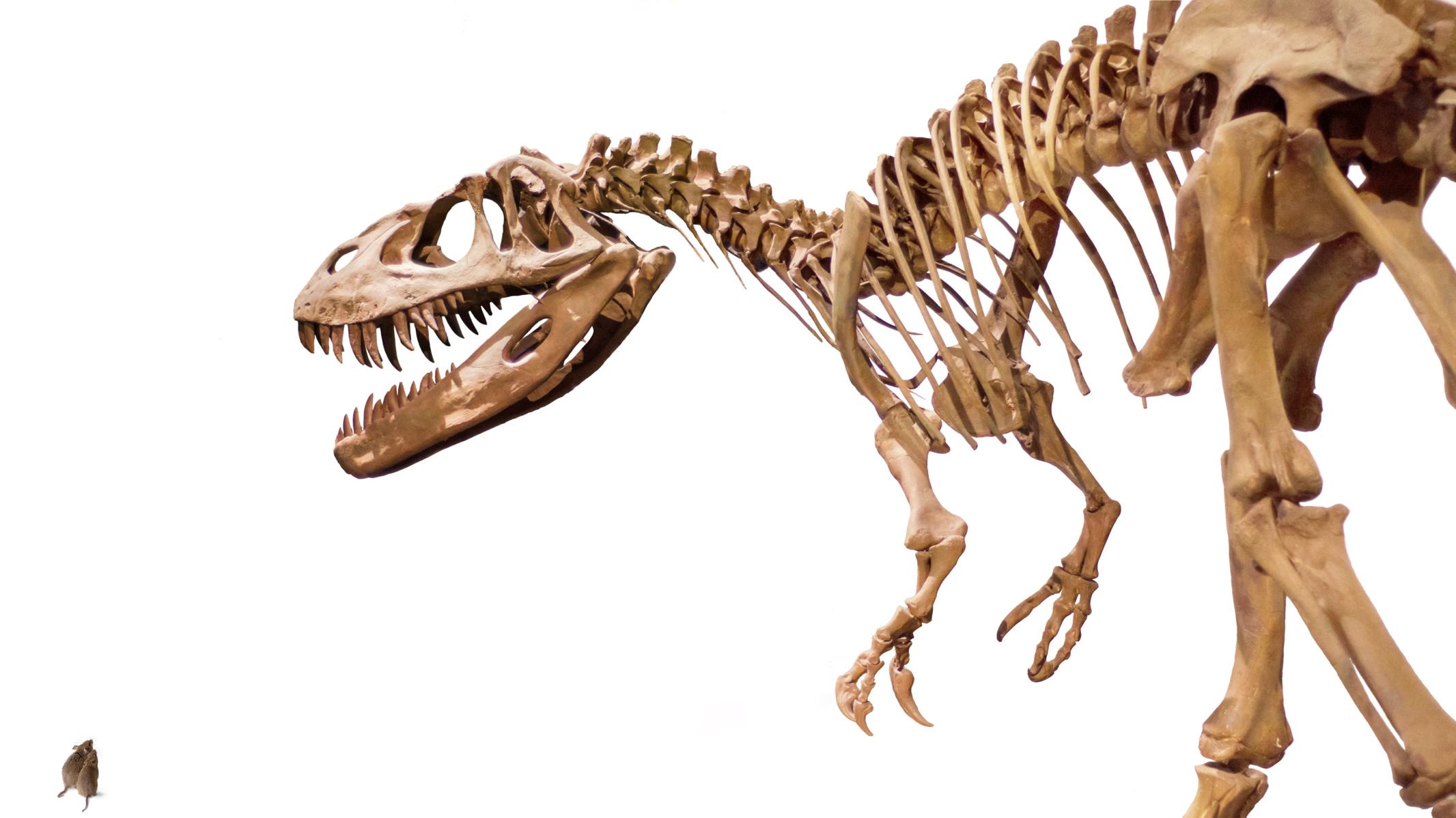 T-Rex vs Mice Digital Transformation web.jpg